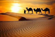 Thumbnail for Amazing Evening Desert Safaris in Sharjah